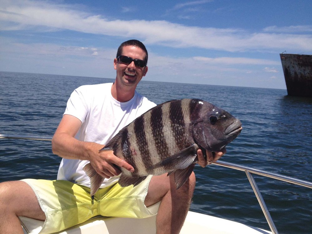 Sheepshead  Photo by Greg Fawcett/courtesy MD Dnr