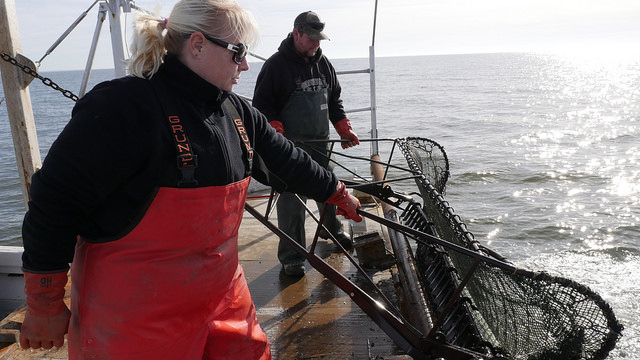 Sampling in the Bay during the 2017 Blue Crab Winter Dredge Survey. Photo: Maryland DNR