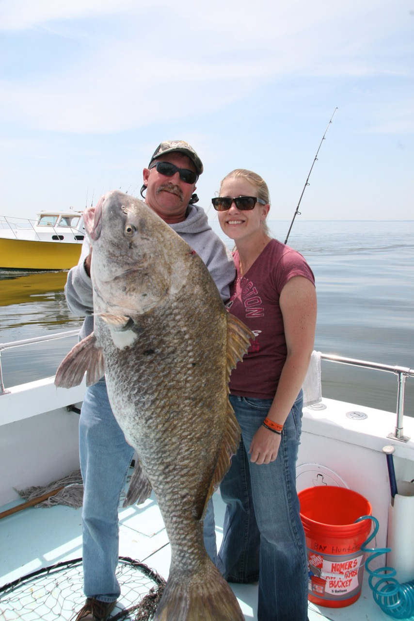 Memorial Day weekend is traditionally when black drum show up in Maryland waters. Capt. Randy Dean of  Bay Hunter  hoists an impressive fish caught by one of his clients a few years back. Photo: Capt. Chris D. Dollar/CD Outdoors