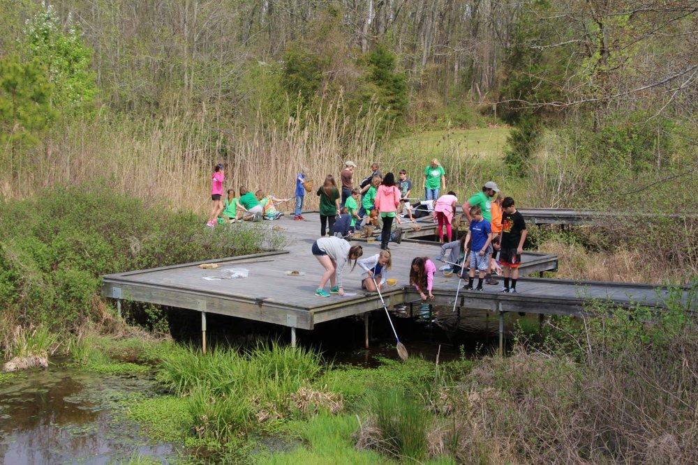Wetland boardwalk at the Adkins Arboretum near Ridgely, Md.   Photo by Kellen McCluskey
