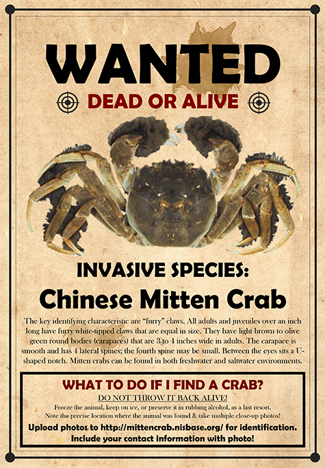 chinese mitten crab wanted poster.jpg