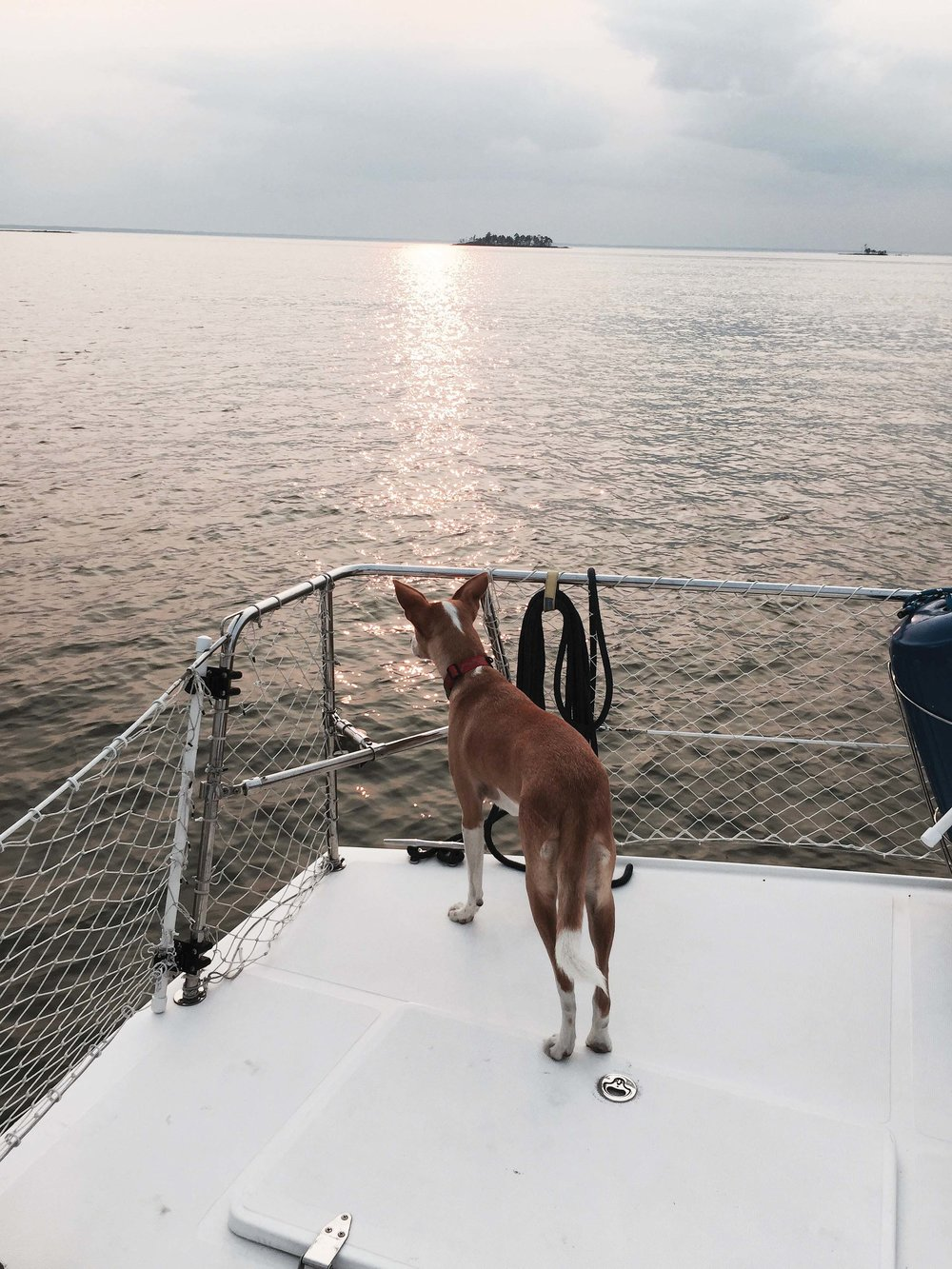 Bindi watches for horseflies at anchor near James Island. Photo by Jody Argo Schroath