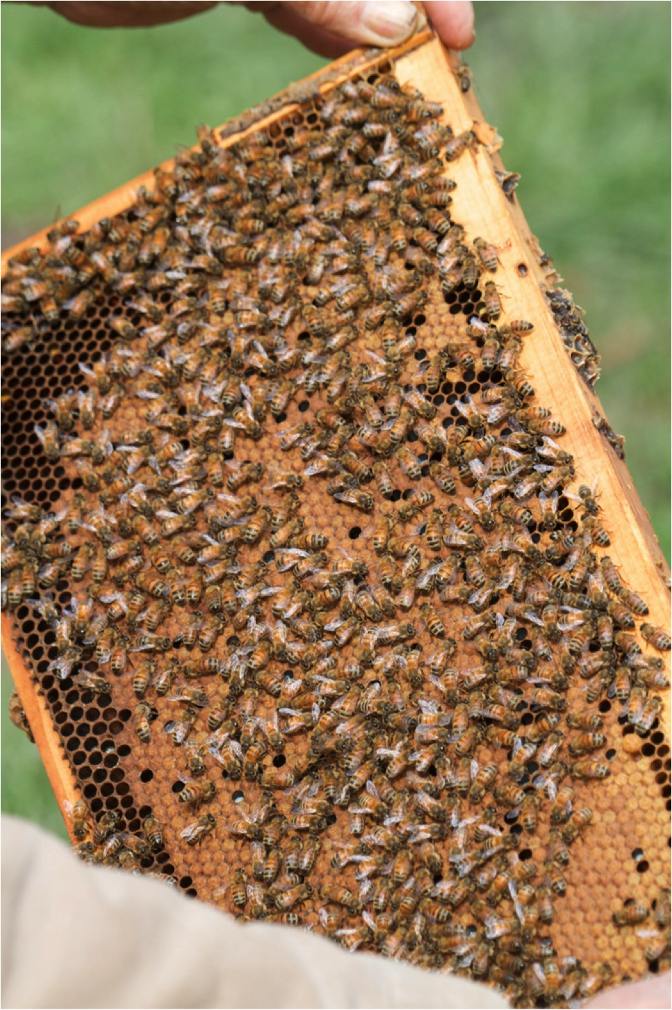 Photo: scientificbeekeeping.com