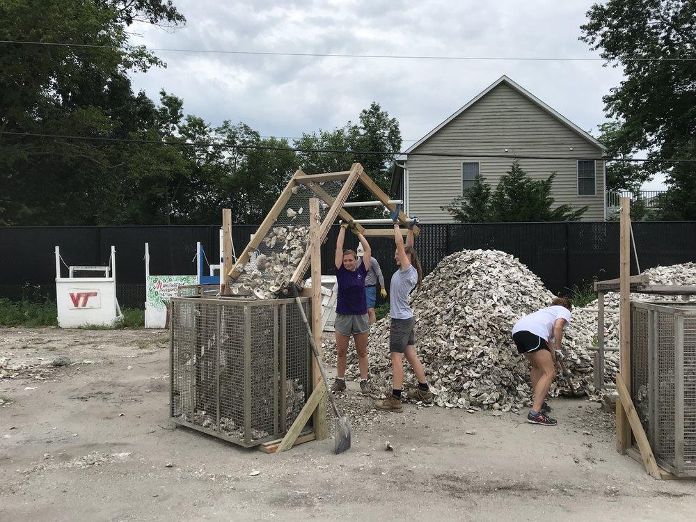 CBF interns shake oyster shells. Photo: Natalie Jones