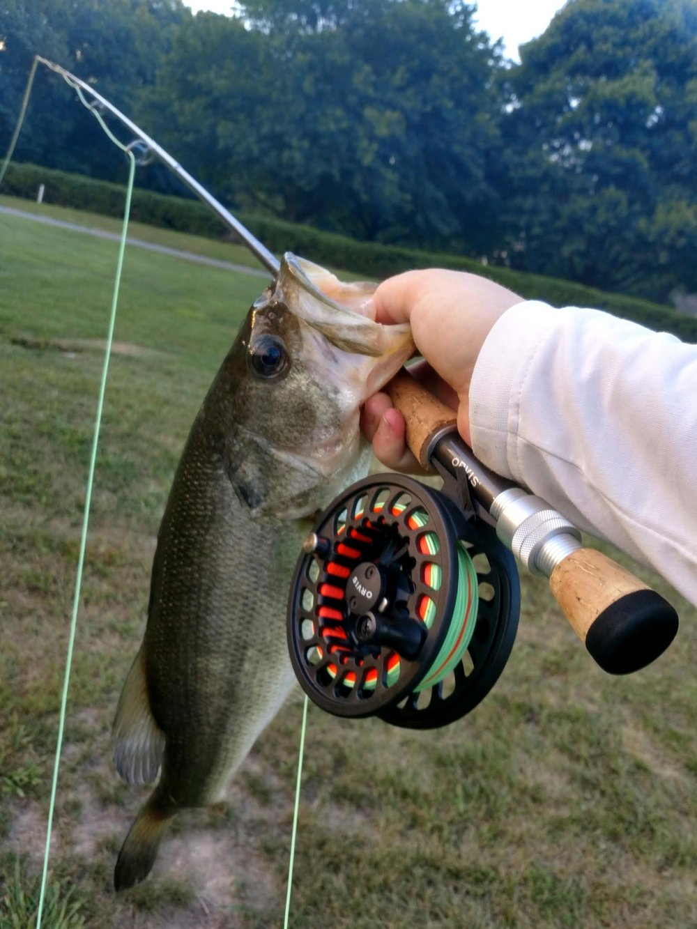 Freshwater anglers are getting in on the fun, too, by tossing lures like rubber frogs and lipless crank baits. Either early or late in the day on ponds have been the best times to catch largemouth bass, which is where and when Zach Goss of Chestertown scored this bucketmouth on his fly rod earlier this week. (Photo courtesy of Zach Goss.)