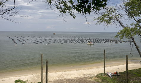 JD Blackwell leases this site in St. Mary's County, Md. Blackwell said that most of his oysters are raised in cages resting on the bottom, unseen at the water's surface but for markers to identify the submerged equipment for boaters. Photo: Dave Harp