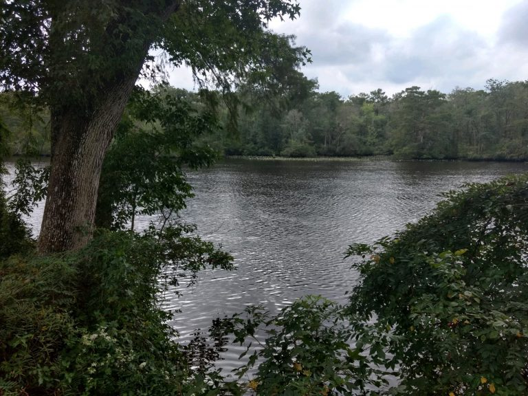 pocomoke river state park.jpg