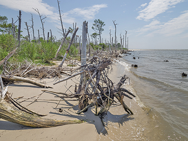 Storms and erosion have taken their toll on this beach on the western shore of Deal Island. As the Bay's water has encroached, trees have died; some are no more than stumps in the water now. (Dave Harp)