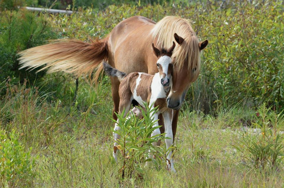 The right to name the foal known as N9BM-JQ went for $1,725 on eBay.