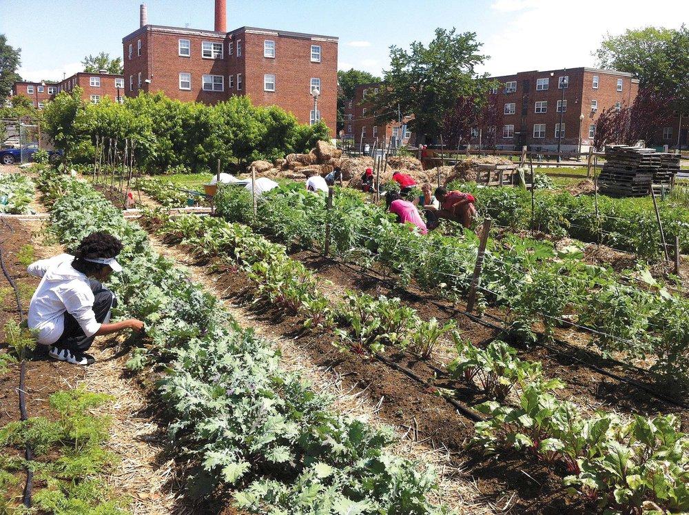 Photo courtesy of Common Good city farm