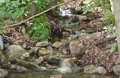 An ephemeral stream in Virginia's Shenandoah Valley. Ephemeral streams would be exempt from federal protection under the newly proposed rule. Photo: Ari Phillips/Environmental Integrity Project
