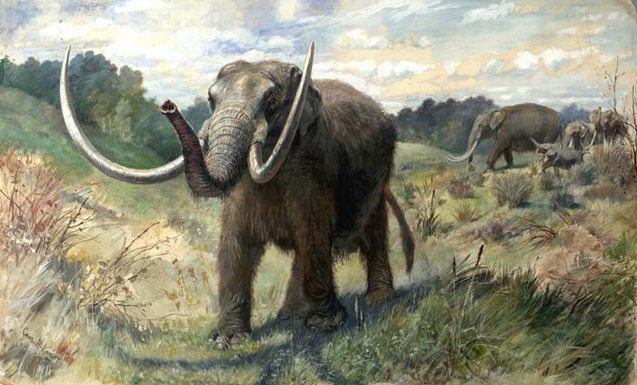 Artwork depicting an American mastodon, by Charles R. Knight.