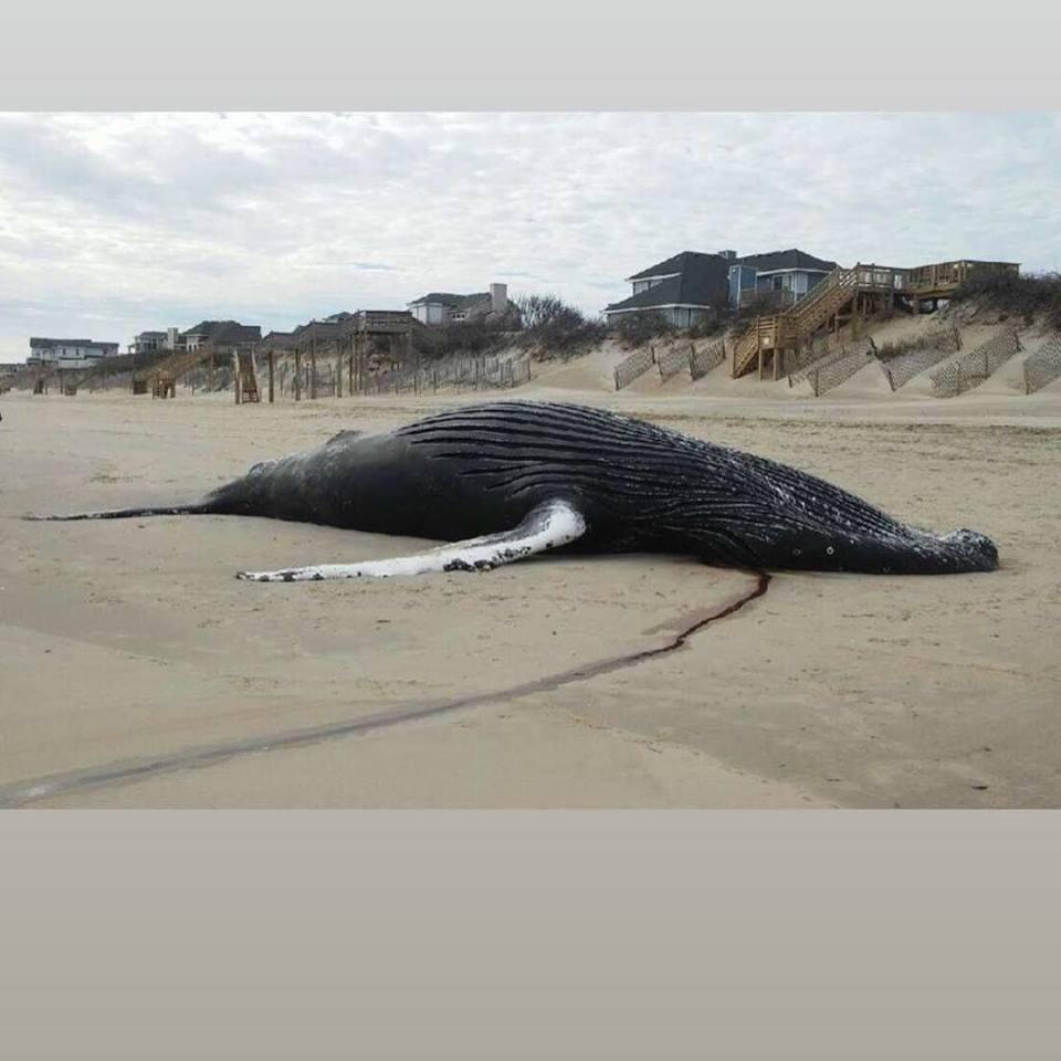Photo: Corolla Beach Rescue/Facebook