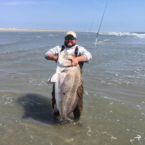 Trey Jones caught this 71-plus pound black drum off the Virginia surf recently. Photo: Trey Jones & Chris' Bait & Tackle/ Facebook.
