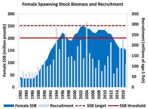 The 2018 Atlantic Striped Bass Benchmark Stock Assessment indicates the resource is overfished and experiencing overfishing relative to the updated reference points defined in the assessment. Decline of large breeding sized rockfish particularly worrisome. Source: ASMFC