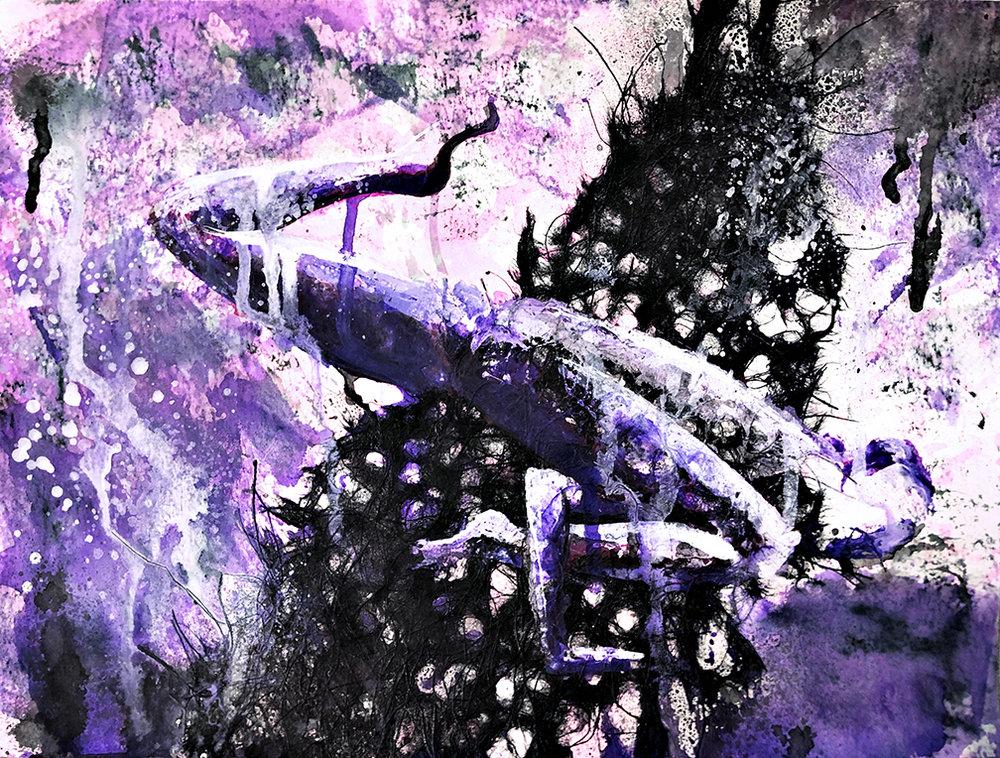 crowvariation2.jpg