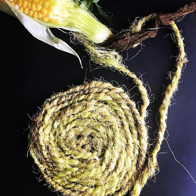 With the sunny warmth of August afternoons gardens and farm markets are bursting with freshness. Today's inspiration for a new natural yarn came from this super sweet corn. As a child I used to make dolls from the husks, hair of corn silk. Why not try spinning that silk? Corn silk spun and plied on a hand spindle. #51yarns #plymagazine #handspunyarns