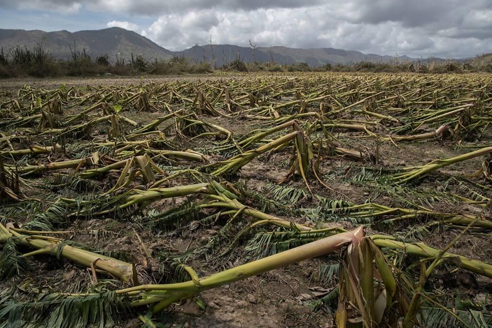 destroyed crops PR.jpg