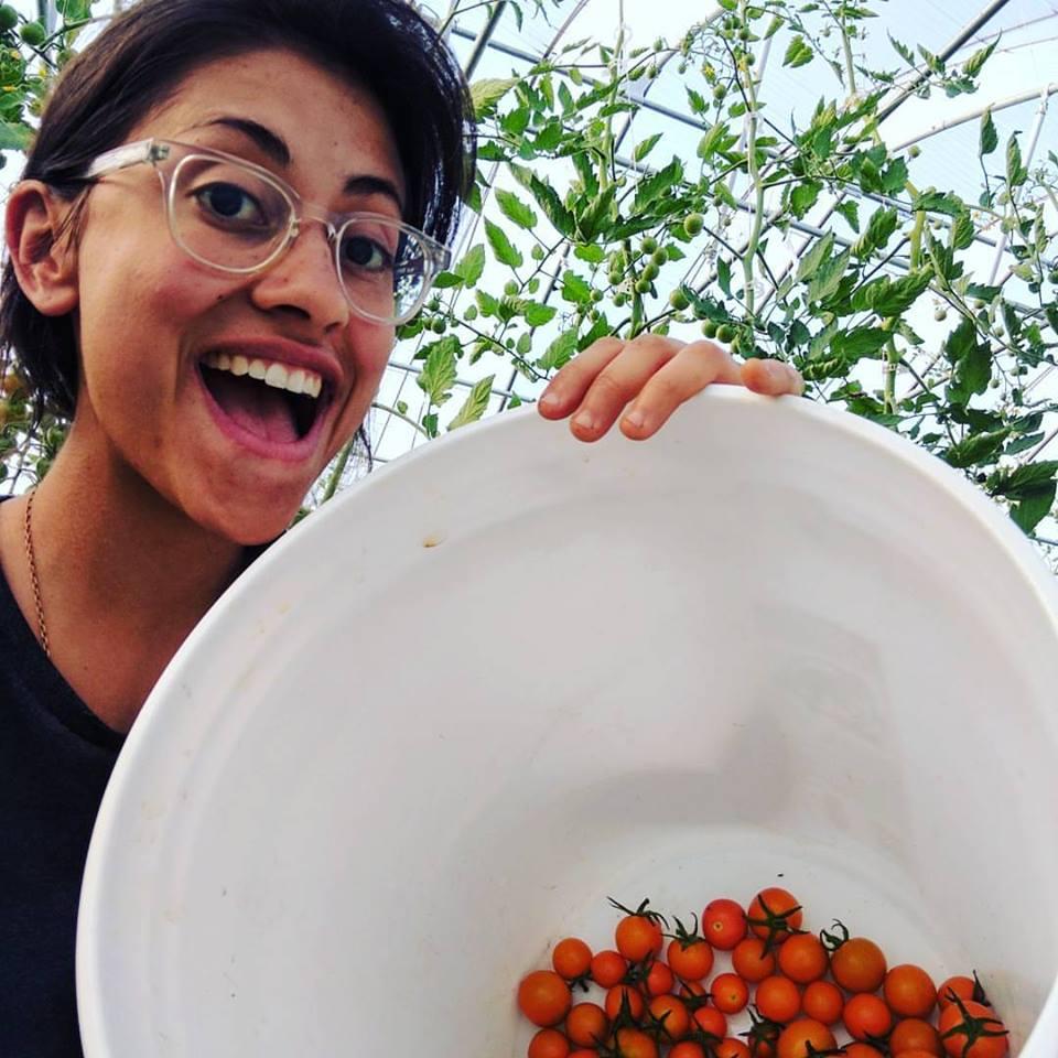 G w:tomatoes.jpg