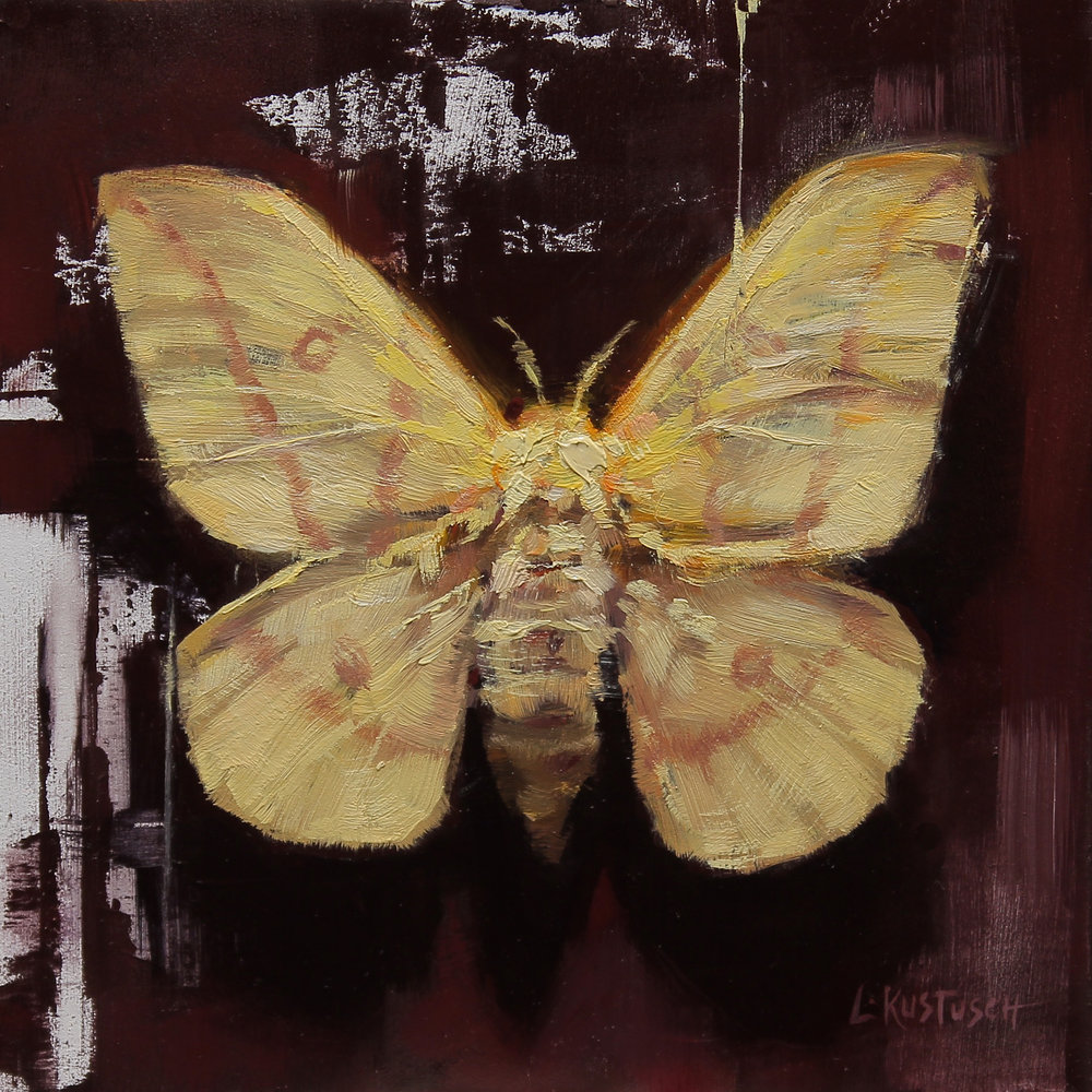 Yellow Imperial Moth