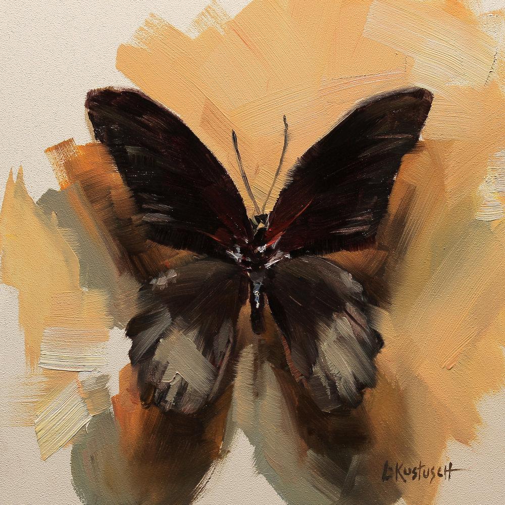 Papilio Daephobus