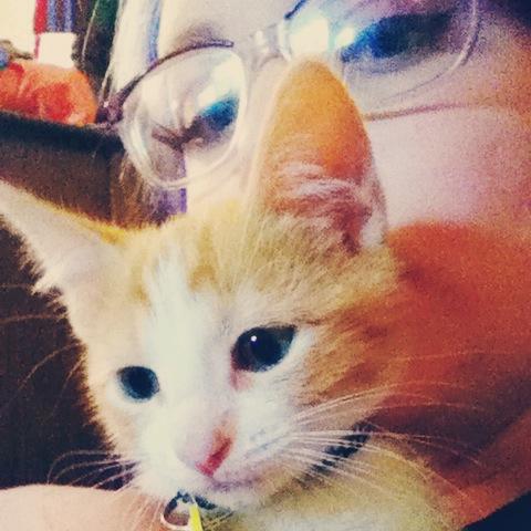Selfie I took with my cat.