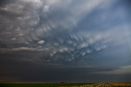 Mammatus Fields