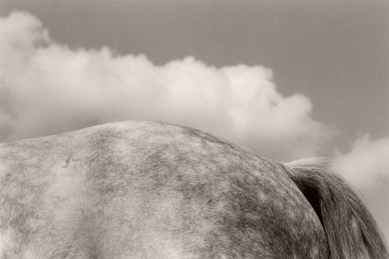 Horse Cloud