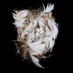 Sharon Beals, Tree Swallow