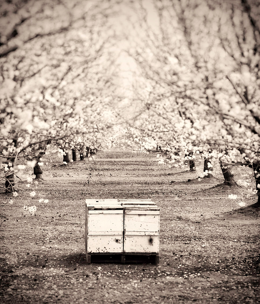 Beehives and Almonds