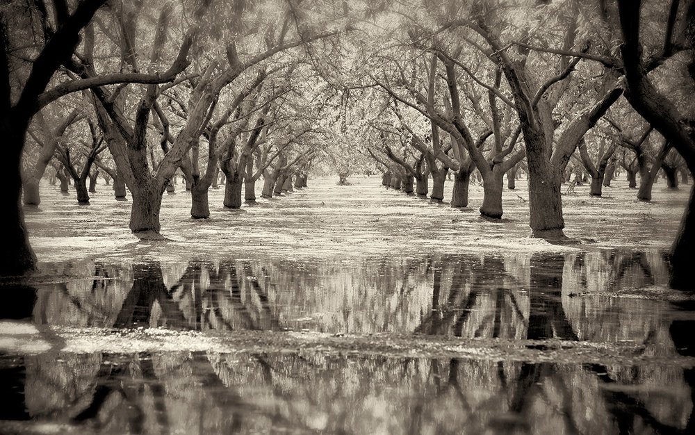 Flooded Almonds Summer