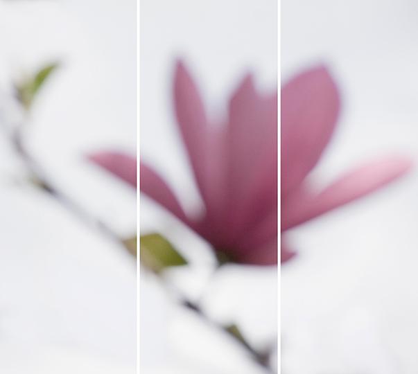 Magnolia No. 10