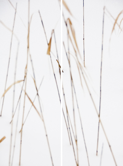 Winter Grasses No. 3