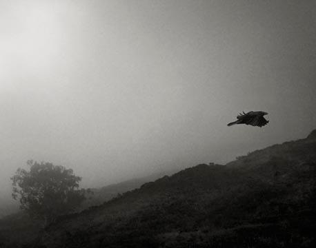 Odin's Cove #18