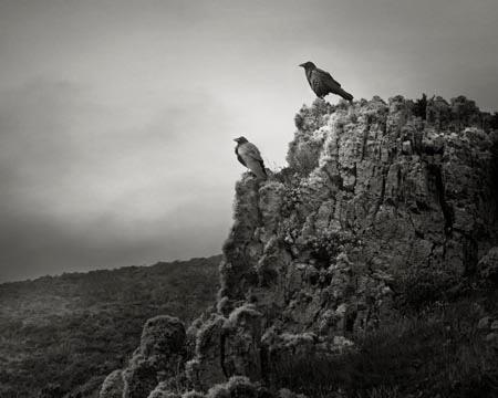 Odin's Cove #15