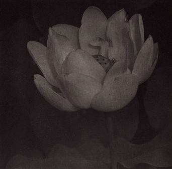 Lotus 19