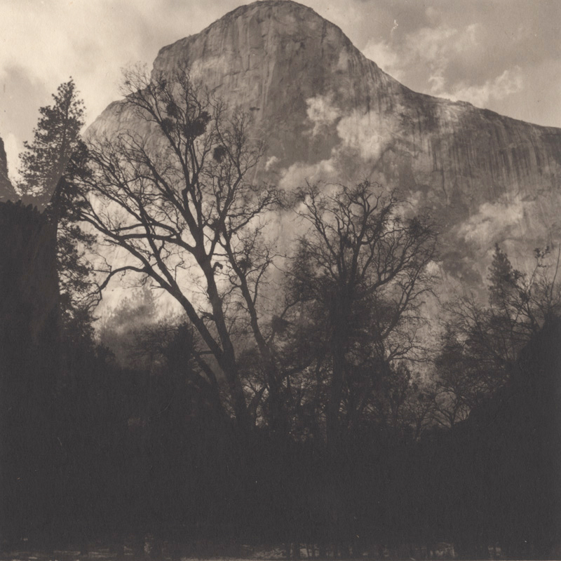 Silent Respiration of Forests — Yosemite #16
