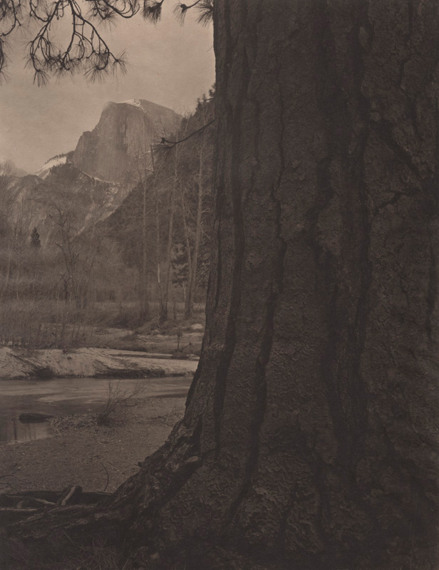 Silent Respiration of Forests — Yosemite #18