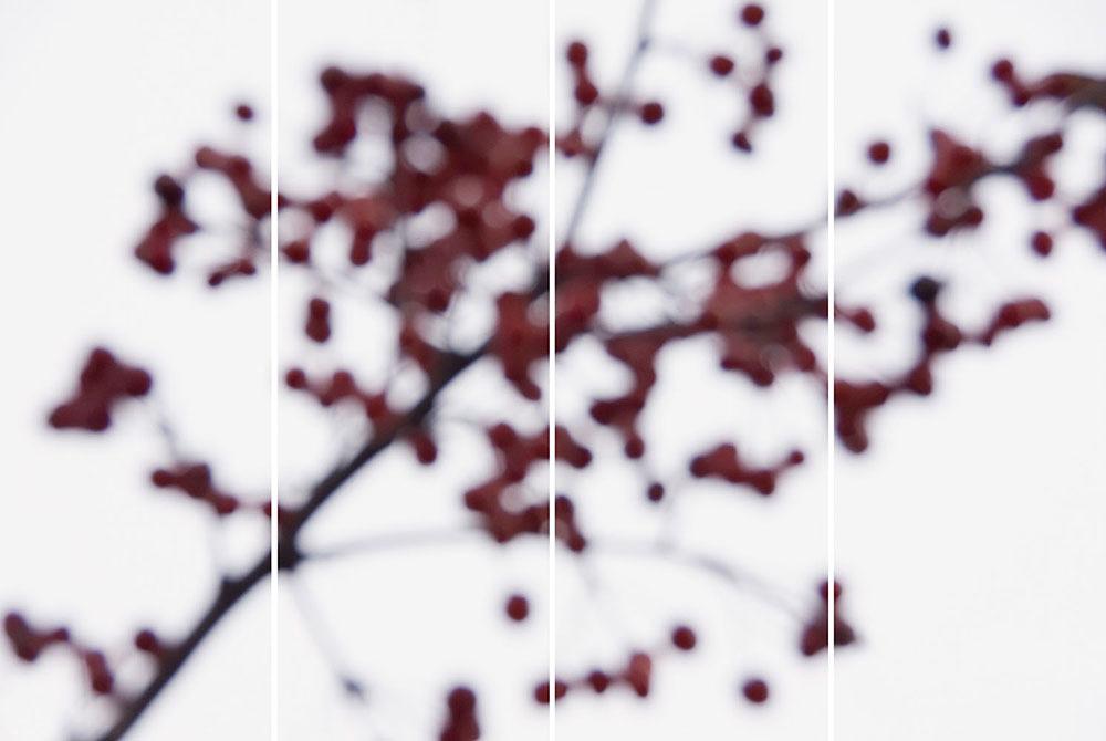 Crabapple (Fall) No. 2