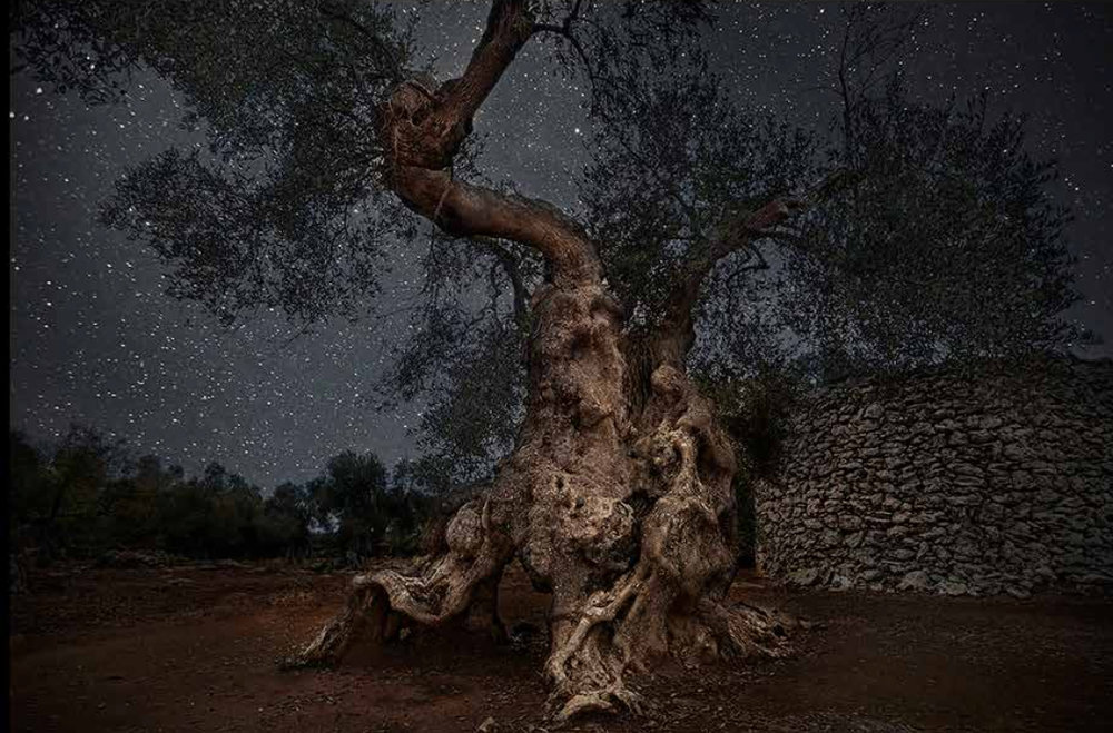 Beth Moon, Diamond Nights, Sargus