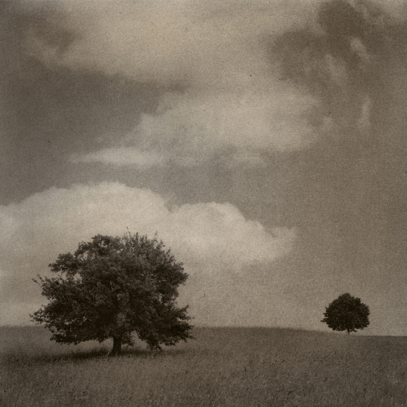 Max Kellenberger, Two Trees