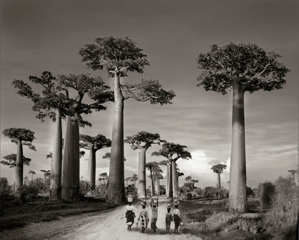 Beth Moon, Off to Market