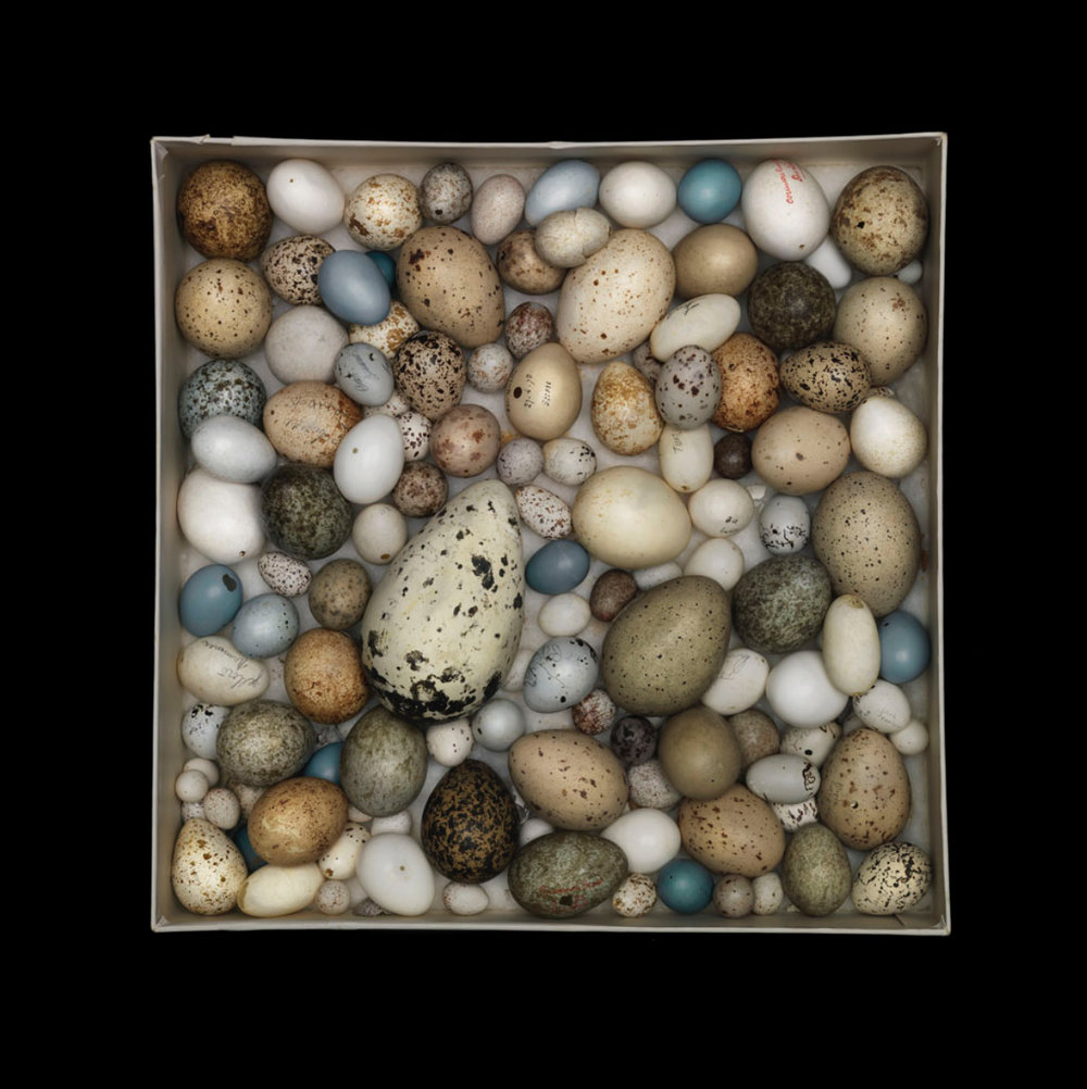 Sharon Beals, Orphan Egg Box