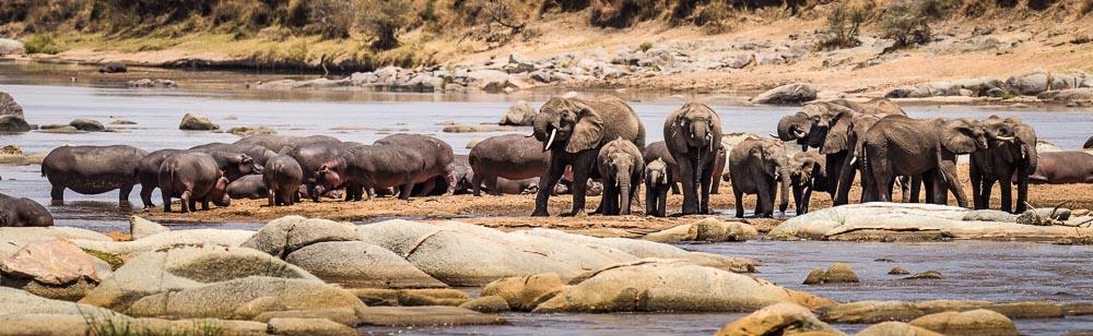 Elephants_Hippo_Mara.jpg