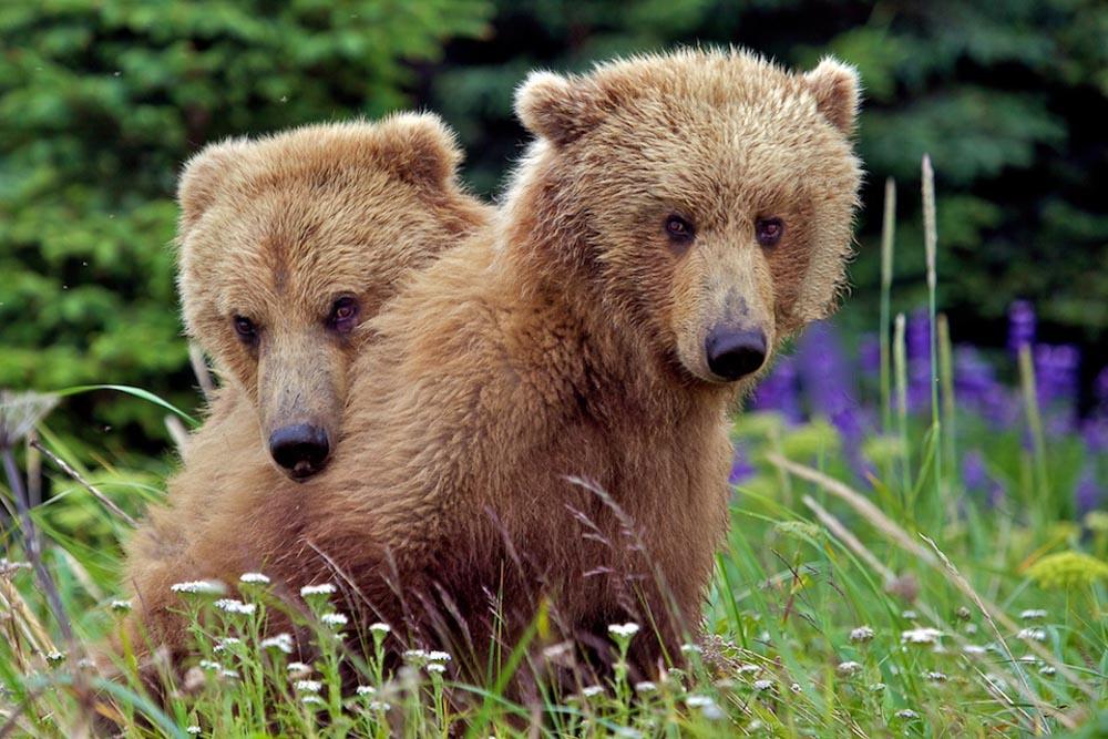 Bears_052.jpg