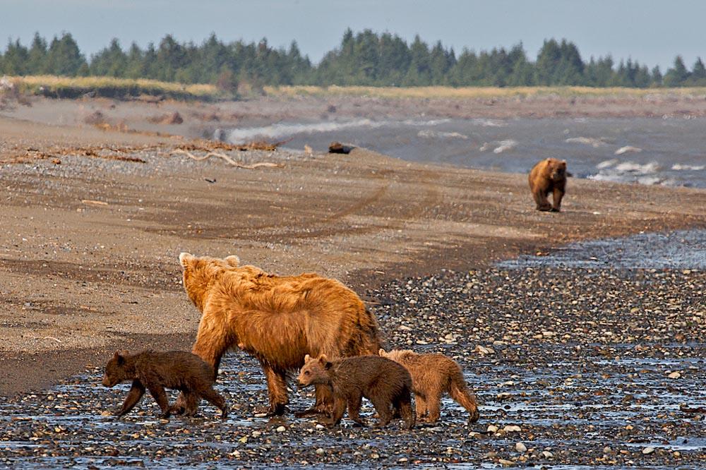 LA-Alaska 113 200907.jpg