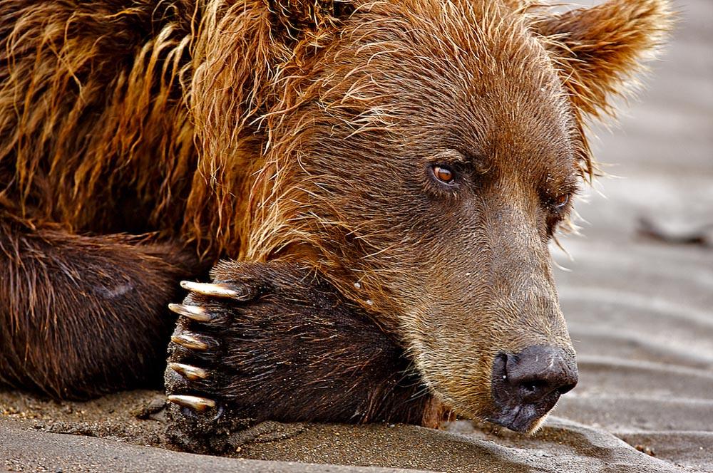LA-Alaska 183 200907.jpg