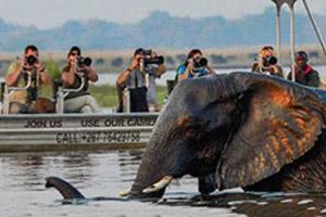 boat_elephant.jpg