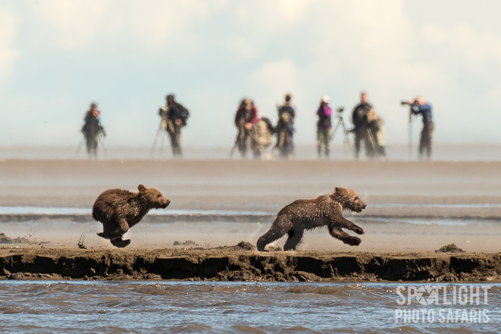 Enjoy photographing grizzlies and pristine landscapes in wild Alaska, one of the most unique destinations in the world.