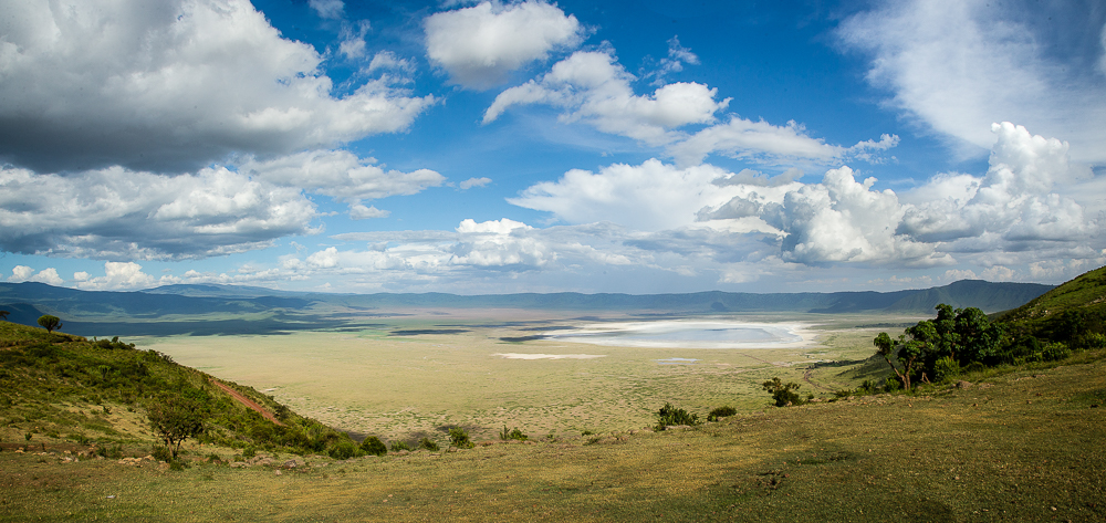 The roughly 100 square mile (260 sq km ) Ngorongoro Crater basin is home to an estimated 26,000 mammals and provides us with the best opportunity of seeing one of the crater's 26 Black Rhino. In addition there are elephants, wildebeests, zebras, eland, both Grant and Thomson gazelles, reedbuck, Cape buffalo, spotted hyenas, jackals, wild dogs, cheetahs and the densest known population of lions.